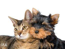 Груминг, тримминг, стрижка собак и котов.