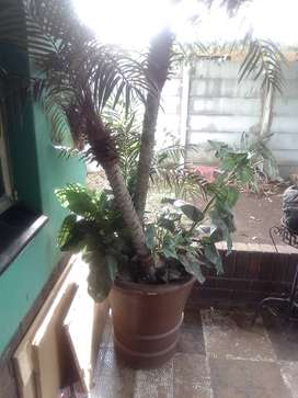 Artificial Tree and plants