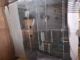 4 budgies and big cage for sale .