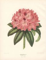 1879 r. KWIATY I reprodukcje XIX w. grafik do aranżacji wnętrza