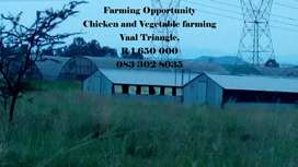 Chicken and vegetable Farming land