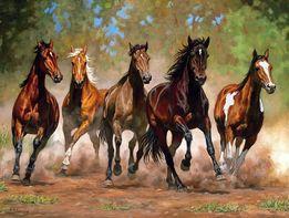 Постой лошадей. Аренда денников. Верховая езда. Уроки конкура.
