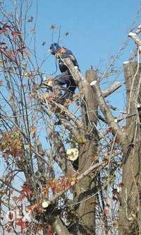 Image of Tree felling and trimming