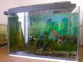 Complete fish tank setup for sale