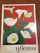 Цветы Комнатные растения и декоративноцветущие кустарники