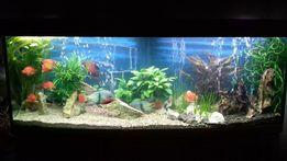Профессиональное обслуживание пресноводных аквариумов