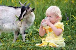 Козье молоко очень вкусное