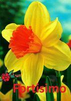 Луковицы тюльпан нарцисс эремурус ирис