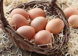 Sprzedam jaja od kur i perliczek z wolnego wybiegu