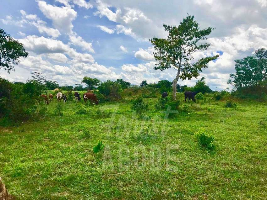 162 acres of land for sale 0