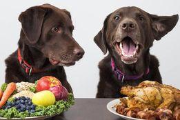 Нутрициология для собак и котов