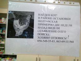 Найден кот. Лукьяновка, ост. Полтавская