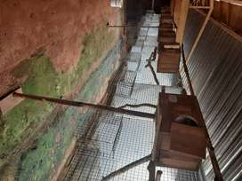10 hanging aviaries for parrots