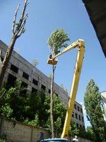 Обрезка деревьев Киев Спил деревьев Корчевка пней Уборка участка Киев