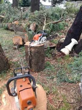 Affordable tree felling and rubble removal