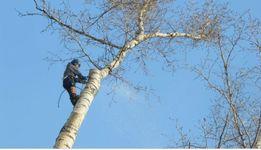 Спил деревьев, заготовка дров