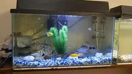 Fish tank with complete accessories