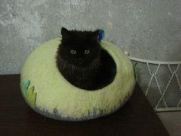 Візьму на перетримку кота. Возьму на передержку кота.