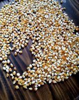 Зерно попкорн кукуруза