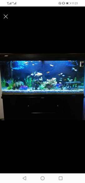 Jebo custom designed fish tank unit.