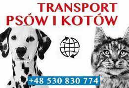 Transport Psa Kota Zwierząt Przewóz Psów Kotów UK Szczeniak York
