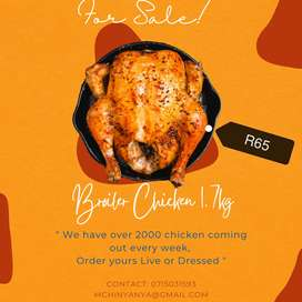 Broiler Chicken 1.7kg Available