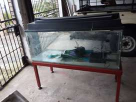 Fish Tank, Pump and Stand