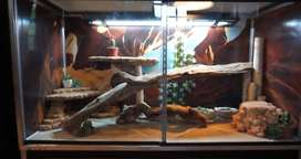Looking for a reptile cage/enclosure