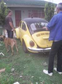 Image of 1978 Beetle For Sale R20000 Neg