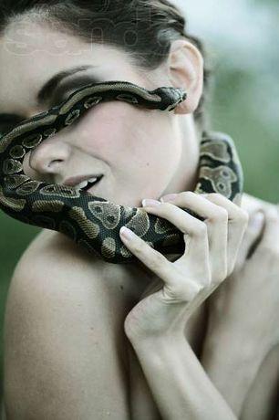 Змея в аренду.