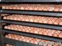 Яйца инкубационные Венгрия Полльша Чехия ( маркерованные )