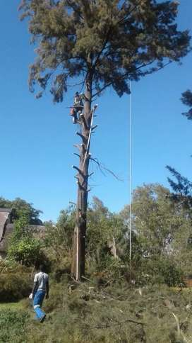 Tree Felling Rustenburg / Boomsloping Rustenburg and grass cutting
