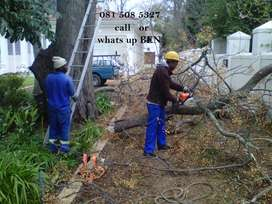 tree felling 081*508*5327 Durbanville fully insured