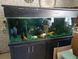Large fish tank with all accessories and gold fish