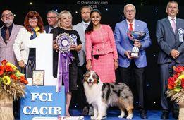 Услуги ХЕНДЛЕРА, професиональный показ собак на выставке!