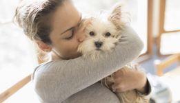 Ветеринарные документы, ветеринарные сертификаты, тест бешенство,титры
