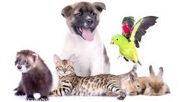 Ветеринарные врач (услуги:выезд на дом, терапия, хирургия, лаборатория