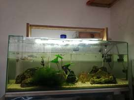 Fish tanks and stands for sale