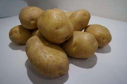 Ziemniaki jadalne Denar, Lord, Red Anna,Terka, Vineta, Melody, Satina