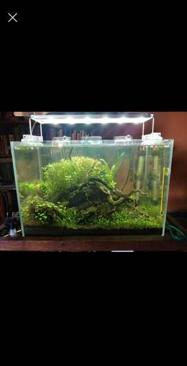 Starfire glass scaped shrimp aquarium for sale