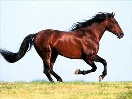 Постой лошадей в Варваровке Николаеве