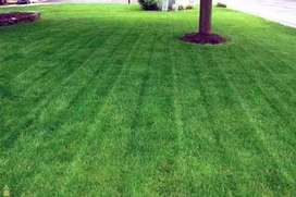 INSTANT LAWN GRASS.
