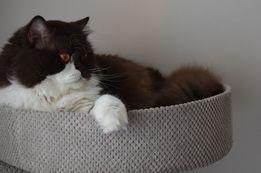 NR11 Drapak dla kota solidny sznur duży 100cm legowisko solidny rozeta