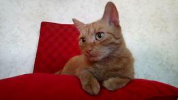 Zaginął rudy kot Mozil!