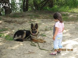 Дрессировка собак индивидуально с выездом.