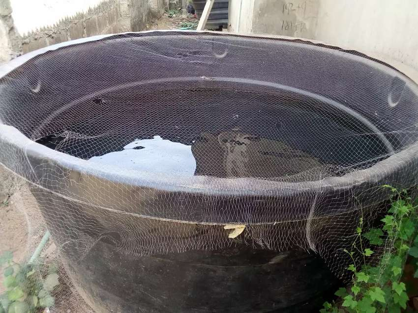 SIX (6) 2000 LITER FISH POND / TANK FOR SALE AT CHEAPER PRICE 0