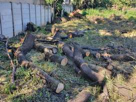 Wood for free in Bedfordview