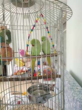 Square parrot cage
