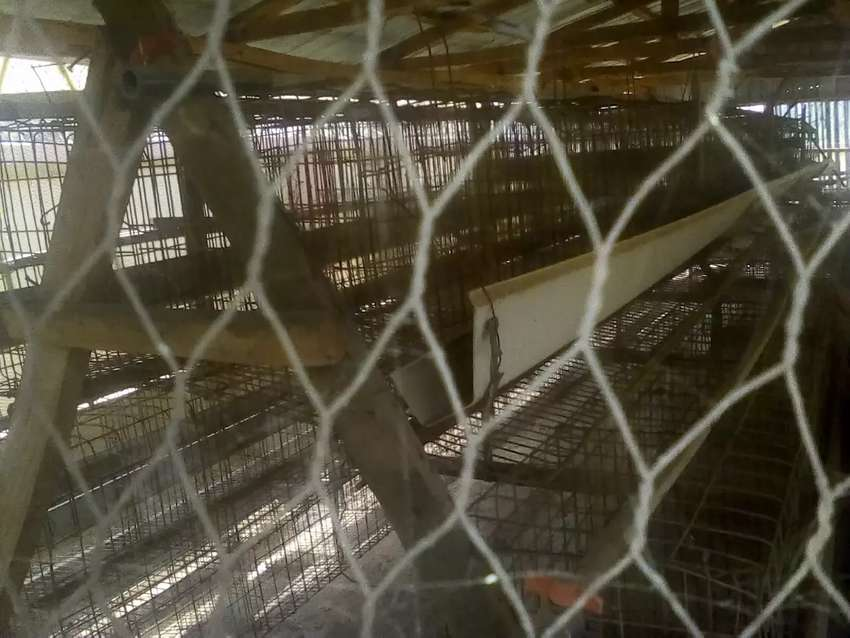 Standard Poultry Cage with water system in Abuja for urgent Sale 0