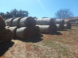 Tef bales for sale
